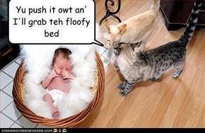 Yu push it owt an' I'll grab teh floofy bed