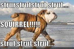 strurstrutstrut strut.... SQUIRREL!!!!! strut strut strut....