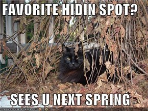 FAVORITE HIDIN SPOT?  SEES U NEXT SPRING