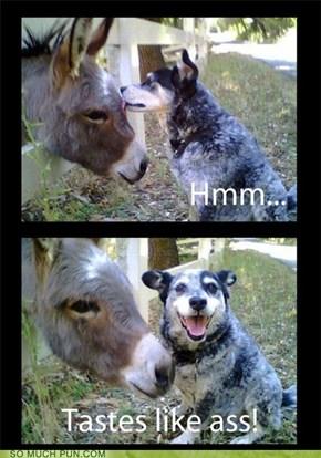 Donkey Ho! Tay?