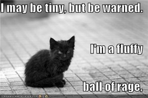 I may be tiny, but be warned. I'm a fluffy ball of rage.
