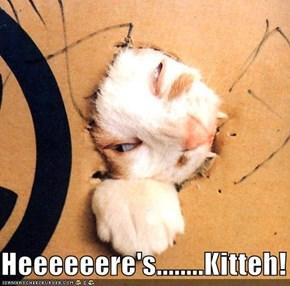 Heeeeeere's........Kitteh!