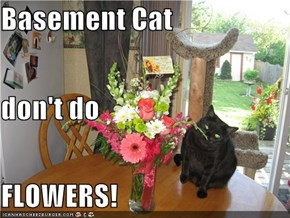 Basement Cat don't do FLOWERS!