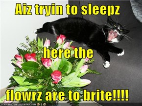 Aiz tryin to sleepz here the  flowrz are to brite!!!!