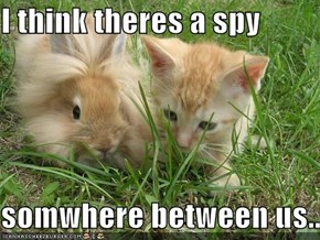 I think theres a spy  somwhere between us...
