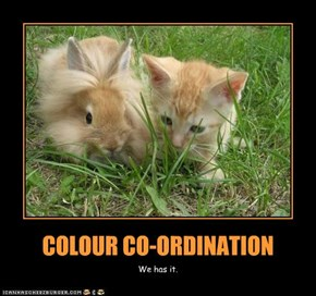 COLOUR CO-ORDINATION