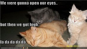 We were gunna open our eyes.. but then we got high.. la da da da da