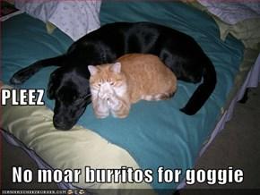 PLEEZ   No moar burritos for goggie