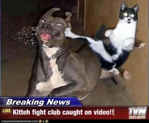 Breaking News - Kitteh fight club caught on video!!