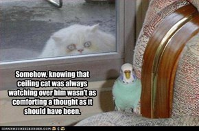 Somehow, knowing that ceiling cat was always watching over him wasn't as comforting a thought as it should have been.