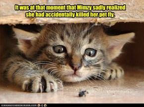 It was at that moment that Mimzy sadly realized she had accidentally killed her pet fly.