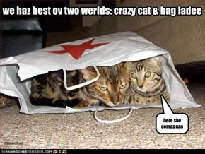 we haz best ov two werlds: crazy cat & bag ladee