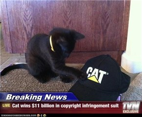 Breaking News - Cat wins $11 billion in copyright infringement suit