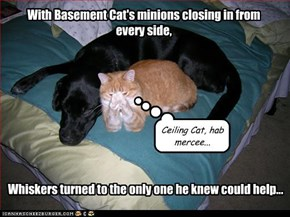 With Basement Cat's minions closing in from every side,