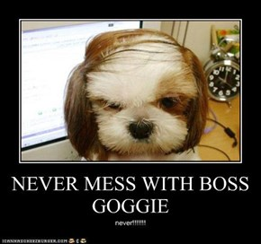 NEVER MESS WITH BOSS GOGGIE