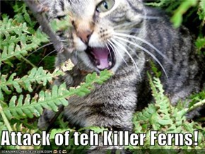 Attack of teh Killer Ferns!