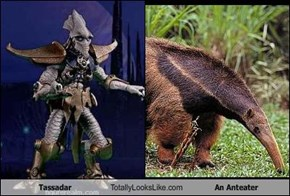 Tassadar Totally Looks Like An Anteater