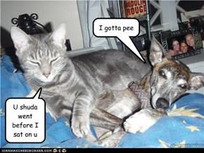 Hey...kitteh...umm...