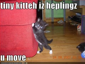 tiny kitteh iz heplingz  u move
