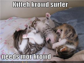Kitteh krowd surfer