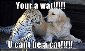 Your a wat!!!!!  U cant be a cat!!!!!