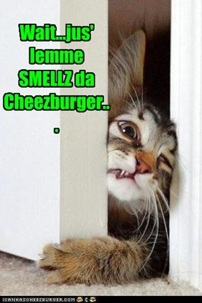 Wait...jus' lemme SMELLZ da Cheezburger...