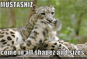 MUSTASHIZ  come in all shapez and sizes