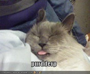 purdderp
