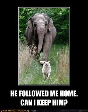 HE FOLLOWED ME HOME.  CAN I KEEP HIM?