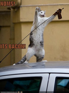 NOMS! ITS BACON!