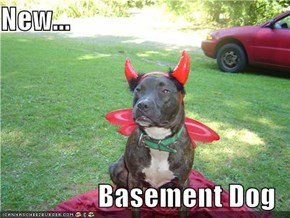 New...  Basement Dog