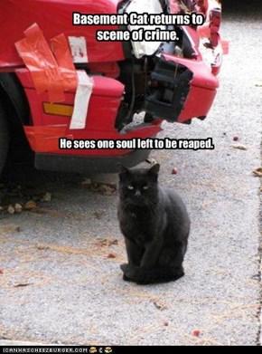 Basement Cat returns to scene of crime.
