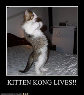 KITTEN KONG LIVES!!