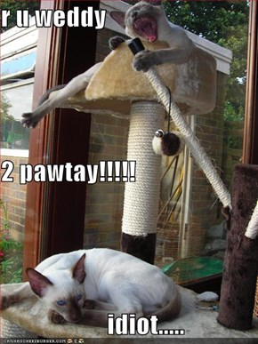 r u weddy 2 pawtay!!!!!                      idiot.....