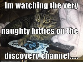 Im watching the very naughty kitties on the  discovery channel.....