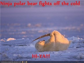 Ninja polar bear fights off the cold  HI-YA!!!