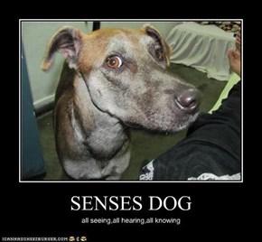 SENSES DOG