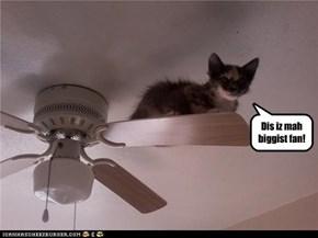 Biggest fan