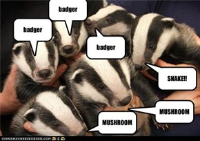 badger song badgers!!!