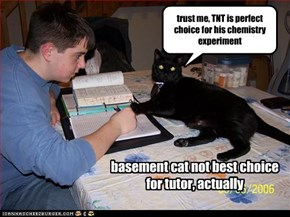 basement cat not best choice for tutor, actually