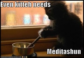 Even kitteh needs  Meditashun