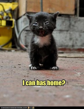 I can has home?