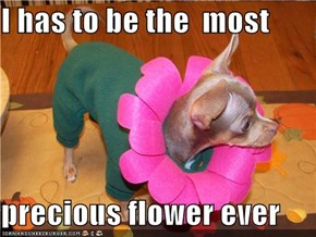 I has to be the  most  precious flower ever