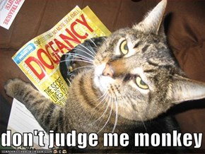 don't judge me monkey