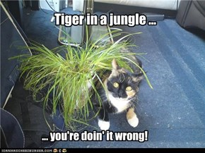 Tiger in a jungle ...