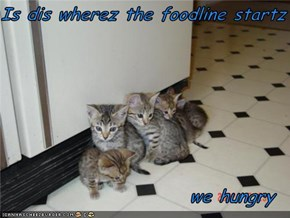 Is dis wherez the foodline startz                           we hungry
