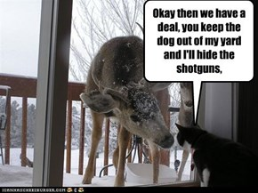What animals really talk about.