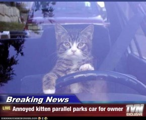 Breaking News - Annoyed kitten parallel parks car for owner