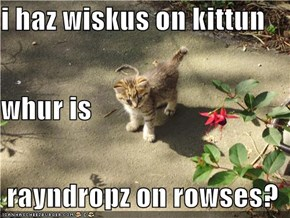i haz wiskus on kittun whur is  rayndropz on rowses?