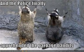 And the Police finally  apprehended the garbage bandits